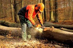 Forsthosen Angebote